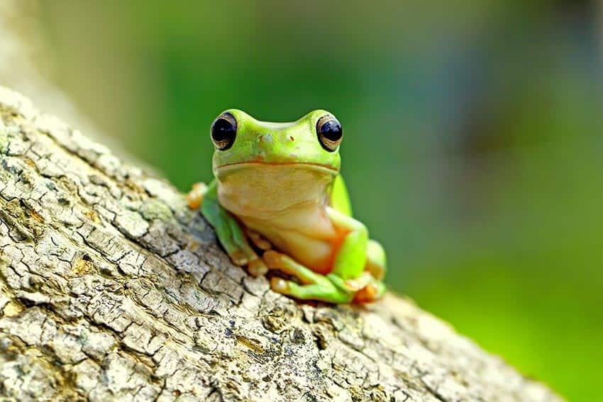 La grenouille qui ne savait pas qu'elle était cuite…